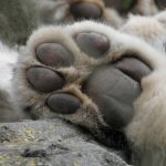 Paws for Thought